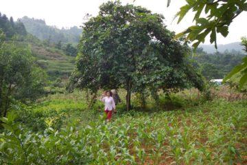 Agrobiodiversity